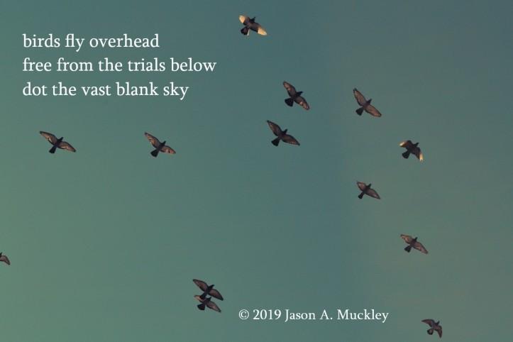 Birds Fly Overhead (Haiku)