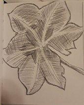 Leaf Drawing #1