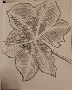 Leaf Drawing #1