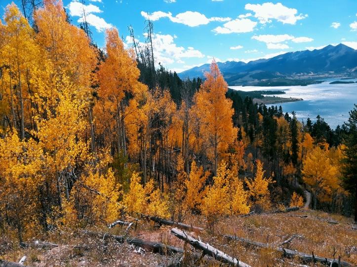 Aspen Leaves_Dillon Reservoir_Tenmile Peak_2019-09-28
