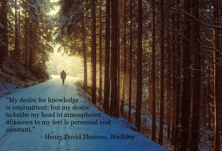david-mark-quote-henry-david-thoreau-walking-pixabay