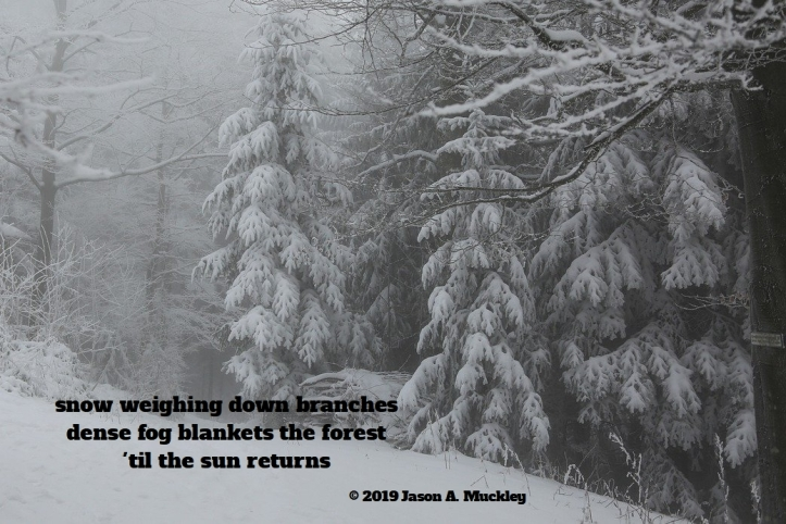 temporary-haiku-kurt-bouda-pixabay.jpg
