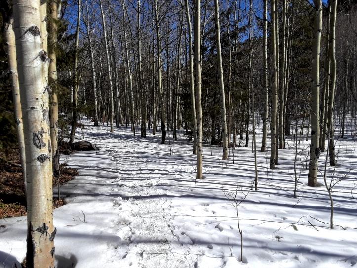 Snowy Trail_01-25-20