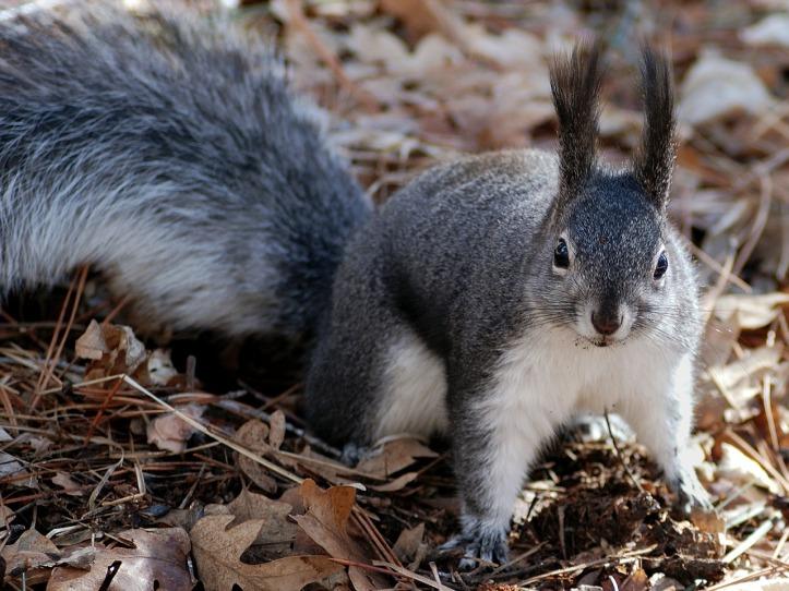 squirrel-appreciation-day