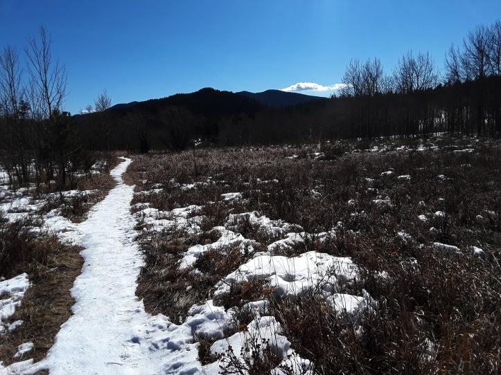 Winter Trail_01-25-20